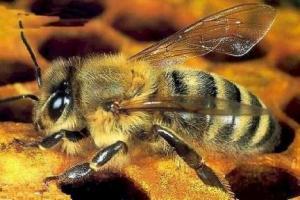 cura hiv -veleno api